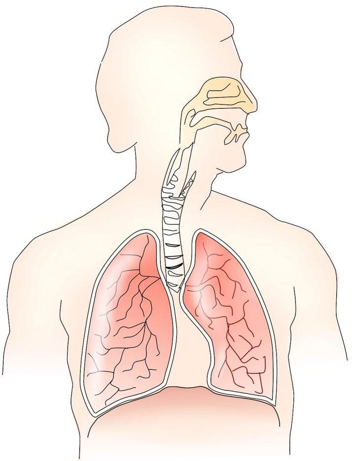 Esenciálne oleje na dýchacie cesty